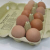 eggs-crate of 10 2